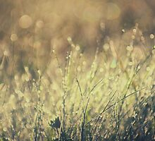 morning dew by kavolis