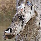 Bird on Tree (2) by Irene Whennan