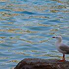 Jonathon Seagull by Irene Whennan