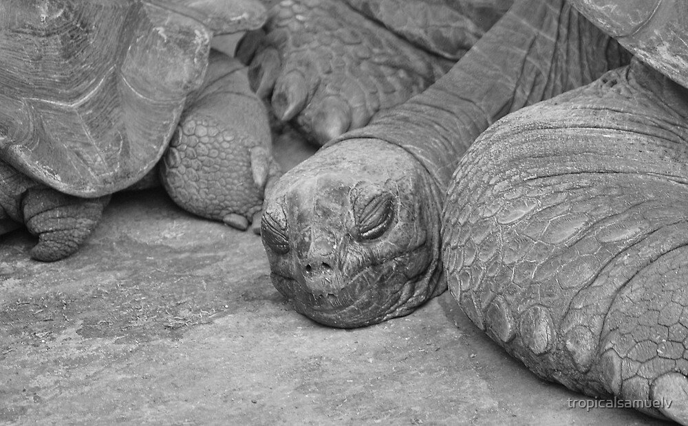 Sleeping by tropicalsamuelv