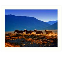 Mustang Trail Art Print