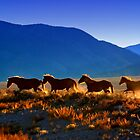 Mustang Trail by Arla M. Ruggles