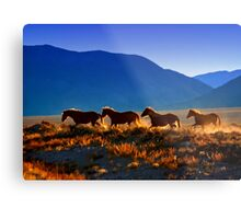 Mustang Trail Metal Print