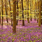 Bluebells Wood 07 by lc-photo