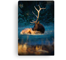 Relaxing In The Morning Light Of Autumn Canvas Print