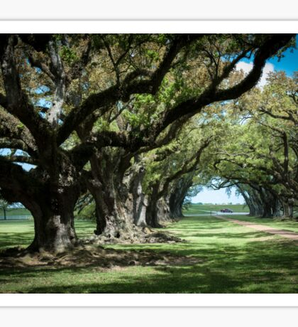 Ancient oak trees at Oak Alley Plantation, Vacherie, Louisiana, USA Sticker