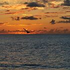 Pelican in the Sunrise by khphotos