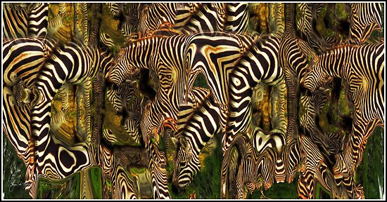 A Confusion of Zebra by Wayne King