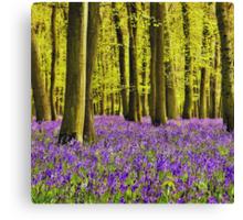 Bluebells Wood 17 Canvas Print