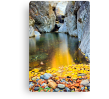 wild beauty of autumn in deep forest Canvas Print