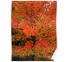 Colours of Autumn 2 Poster