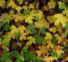 Autumn Carpet by Ana Belaj