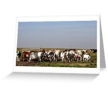 Lincolnshire Cows Greeting Card