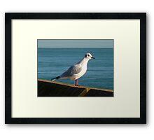 Sea Bird  Framed Print