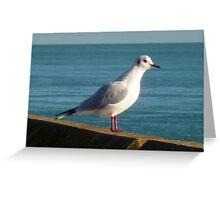 Sea Bird  Greeting Card