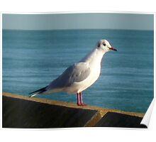 Sea Bird  Poster