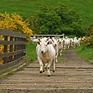 Charge of the Sheep Brigade by RoystonVasey