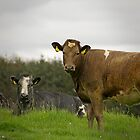 Staring Cows by TehRen