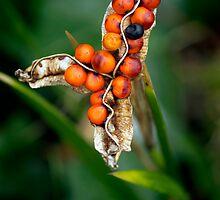 Orange Berries and Seed Pod by TehRen