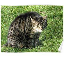 Mangerton Mill Cat Poster