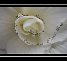 Sympathy Thank You White Rose with Winding Words of Gratitude by Samantha Harrison