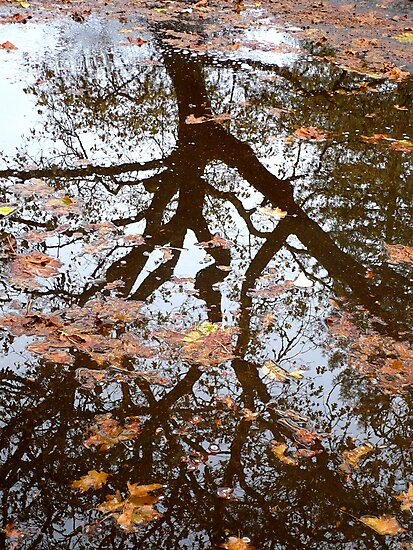 Reflection by Jess Meacham