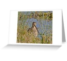 Snipe Greeting Card