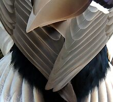 Mallerd Duck Feathers 10 by Magic-Moments