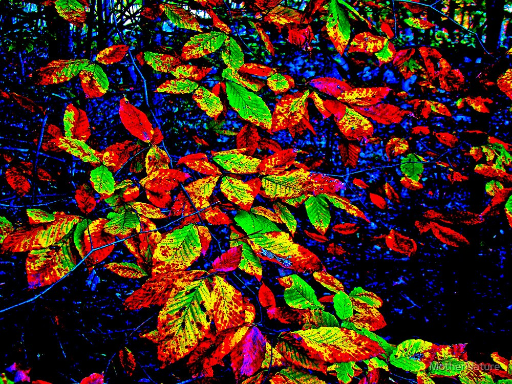 Autumn In Extremis by MotherNature
