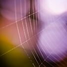 Spider web with dew drops by marina63