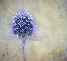 Blue Thistle by marina63