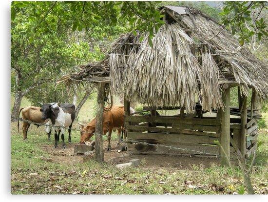 Mountain Pine Ridge Area in San Ignacio - Belize, Central America by Jeremy Lavender Photography