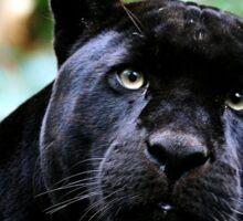Black Jag Sticker