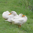 Ducks by Annabella
