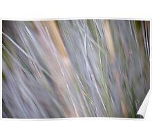 Soft grass Poster