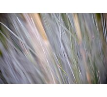 Soft grass Photographic Print