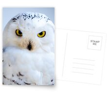 Snowy Owl Postcards