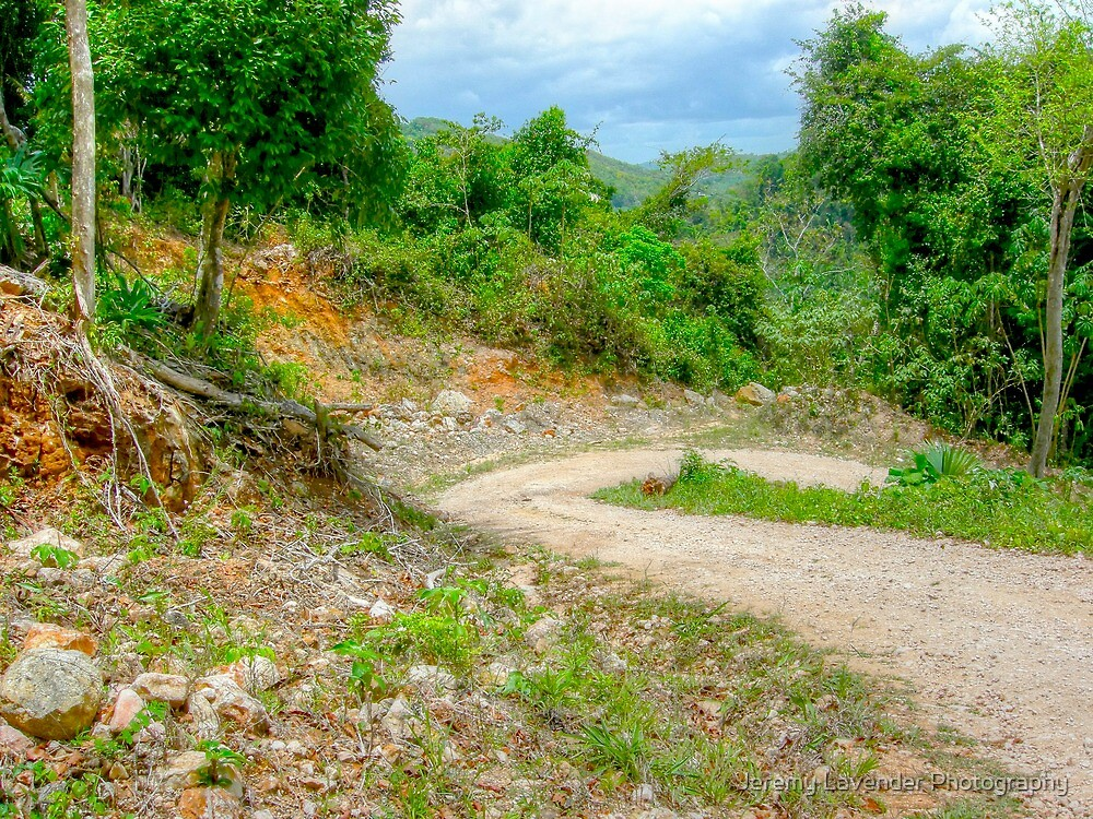 Mountain Pine Ridge Road in San Ignacio - Belize, Central America by Jeremy Lavender Photography
