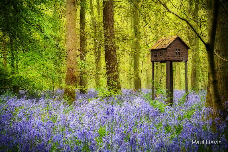 Birdhouse with view by Paul Davis
