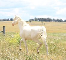 White horse in a field by Buddy Ahearn