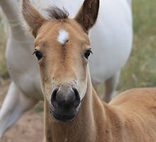 28 days old and not camera shy by Buddy Ahearn