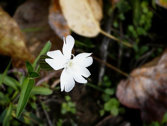Winter Flower by Jess Meacham