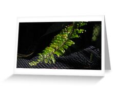 high ISO Greeting Card