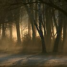 Morning Fog by runawaywind