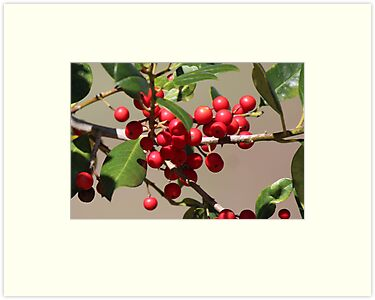 Holly Jolly Berries by Bob Hardy