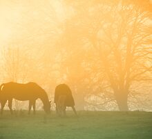 Horses in the mist by cj1970