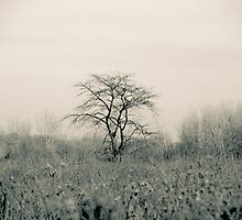 Tree in a meadow Fallen Timbers by Mitch Labuda