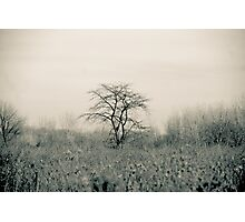 Tree in a meadow Fallen Timbers Photographic Print