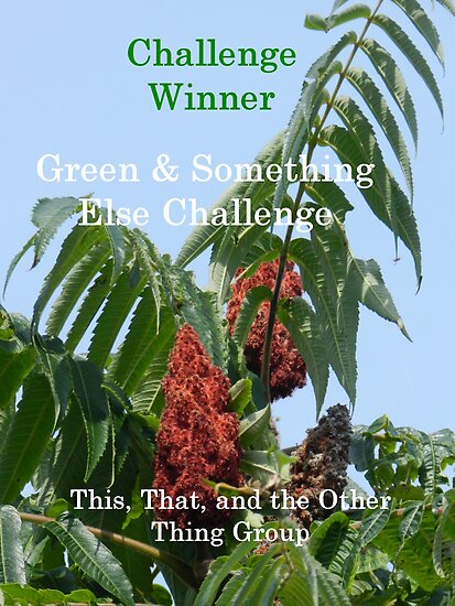 Challenge Winner - Green & Something Else by quiltmaker