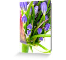 Agapanthus Blooming Greeting Card